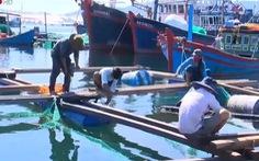 Cảnh báo tảo độc trên vịnh Vân Phong