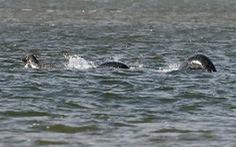 Thủy quái có thật? - Kỳ 2: 'Quái vật' hồ Loch Ness