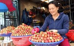 Phân biệt dâu tây Đà Lạt, dâu tây Trung Quốc