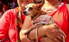 Sắc đỏ may mắn nhuộm thắm châu Á dịp năm mới