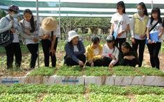Dạy trò trồng rau hữu cơ theo chuẩn Nhật Bản