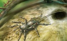Kinh ngạc nhện có đuôi dài như bò cạp