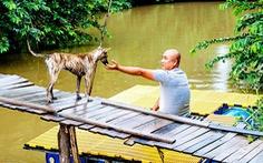 Đi tìm chuỗi gen đặc trưng của chó Phú Quốc