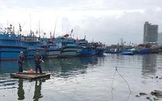 Đà Nẵng không thể so với Tokyo khi xây cảng cá
