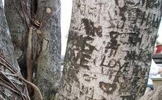 Khắc sẹo vào cây nơi thờ tự, các cặp đôi muốn gì?