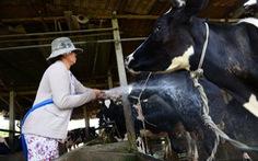 TP.HCM kiến nghị thí điểm bảo hiểm nông nghiệp với bò sữa và bò thịt