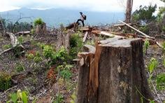 Quảng Nam kỷ luật lãnh đạo kiểm lâm vì vụ phá rừng Tiên Lãnh