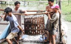 Miền Tây có gần 600 tỉ đồng sản xuất cá tra giống