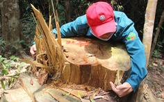 Bắt quả tang vụ phá rừng phòng hộ Sông Kôn