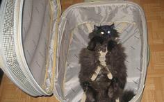 Loạt ảnh ngộ nghĩnh về vali du lịch