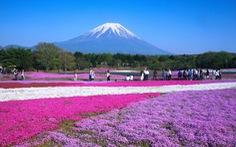 7 nơi ngắm hoa mùa xuân đẹp ngất ngây