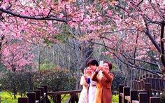 9 địa điểm để ngắm hoa anh đào bên ngoài Nhật Bản