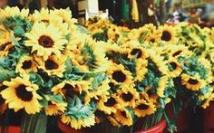 Chợ hoa Sài Gòn nhộn nhịp ngày 8-3