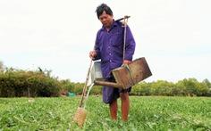 Thiếu nước ngọt, nông dân miền Tây tưới dưa hấu bằng phễu