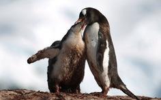 Ngắm vẻ đẹp băng giá và chim cánh cụt ở Nam cực