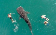 Lạnh lưng với cảnh đang tắm biển gặp cá khổng lồ đến bơi cùng