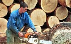Trung Quốc mua gom gỗ, thợ Bỉ chết điếng vì mất việc