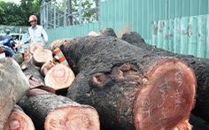 Tổ chức trực xử lý sự cố cây xanh mùa mưa 2018