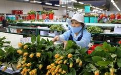 Mỗi năm 300 triệu cành hoa Đà Lạt xuất ngoại