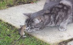 Tom và Jerry có... thật ngoài đời?