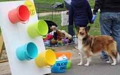Độc đáo lễ hội tôn vinh chú chó nổi tiếng Old Drum