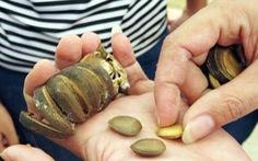 Bảy học sinh lớp 1 ngộ độc nghi do ăn hạt ngô đồng