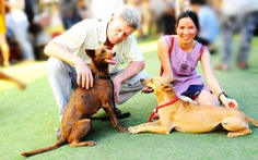 5 lý do chọn thức ăn công nghiệp cho chó cưng