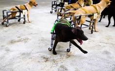 Chàng trai dành hết thời gian rảnh làm xe lăn cho chó hoang