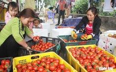 Lấy gì để 5 năm sau nông dân thu nhập 66 triệu đồng mỗi năm?