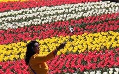 Ngất ngây hoa xuân nở rộ khắp thế giới