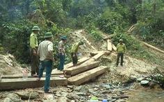 5 cán bộ kiểm lâm bị kỷ luật vì để mất gỗ rừng