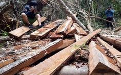 'Nhiều địa phương có biểu hiện làm ngơ cho phá rừng'