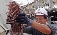 Phát hiện các sinh vật 'ngoài hành tinh' dưới đáy biển Indonesia