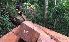 Khởi tố vụ phá rừng phòng hộ sông Kôn