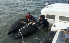Tàu cao tốc bị chìm ở Cần Giờ là 'tai nạn bất khả kháng'