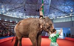 Đề nghị cấm biểu diễn xiếc thú ở công viên Đầm Sen