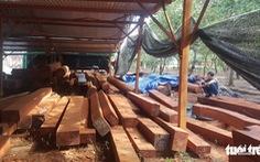 Phượng 'râu' gom gỗ quý chuẩn bị làm biệt thự khủng