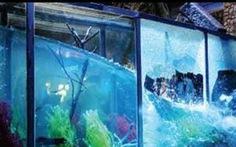 Sự thật về clip chính quyền Sa Pa đập vỡ hồ cá của người dân