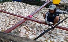 Khảo sát tìm nguyên nhân 1.500 tấn cá chết trên sông La Ngà