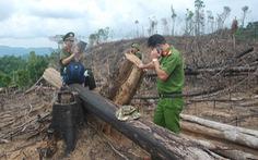 Quảng Nam kỷ luật nhiều cán bộ kiểm lâm để mất rừng