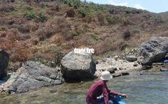 Khánh Hòa chỉ đạo xử lý vụ phá rừng ở vịnh Vân Phong