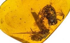 Ếch thời tiền sử lộ diện trong hổ phách 99 triệu năm