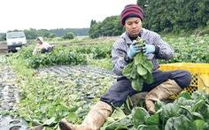 Mở cửa cho lao động nhập cư, dân Nhật lo mất an toàn