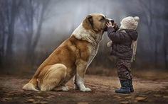 Giải mã 'ngôn ngữ cử chỉ' những chú chó cưng