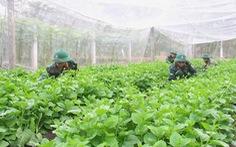 Vườn rau 11 tấn/năm tăng gia sản xuất của bộ đội