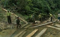 Để mất rừng, nguyên đội trưởng kiểm lâm cơ động bị kỷ luật