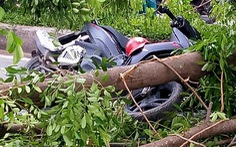 Ba người đi xe máy bị thương do cây xà cừ bật gốc