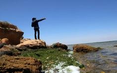 WWF: Địa Trung Hải sắp trở thành 'biển nhựa'