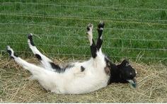 Clip hài: Nín cười với những... tai nạn của thú cưng