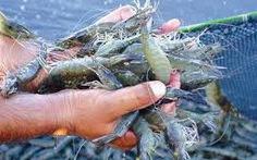 Chỉ đạo điều tra đường dây nhập lậu chất cấm trong thủy sản